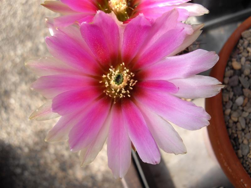 Sascha`s Blüten von 2013 113