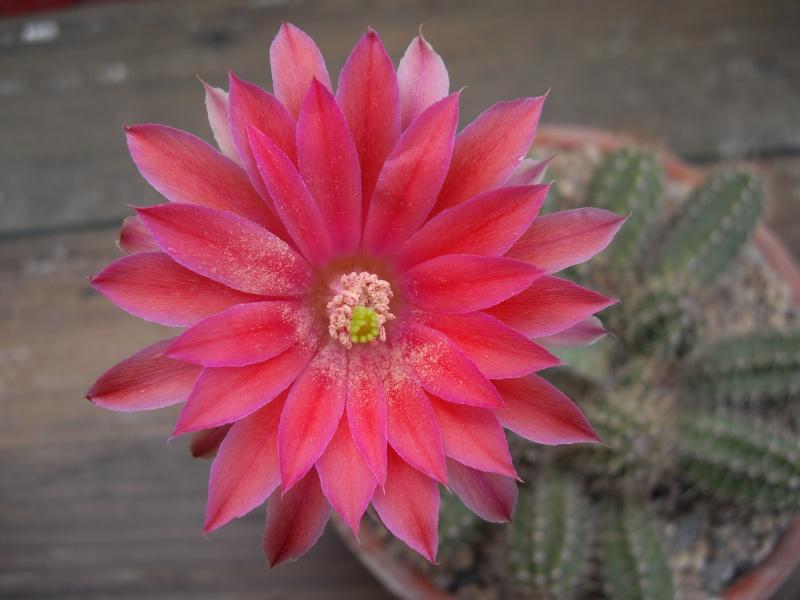 Sascha`s Blüten von 2013 115