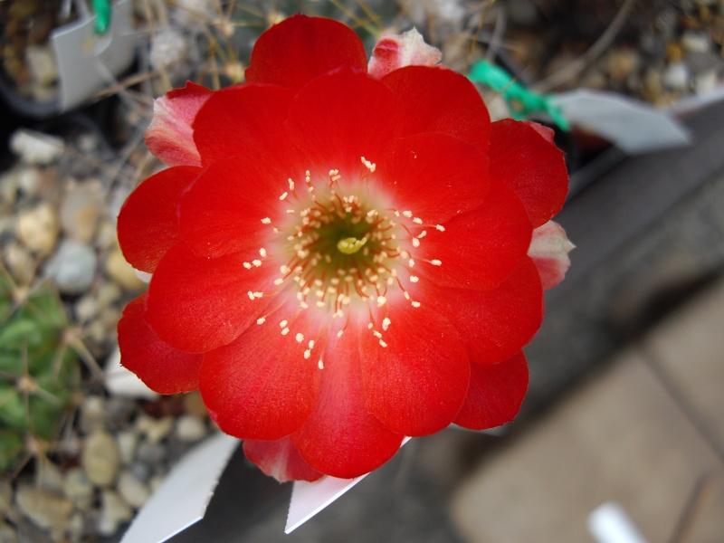 Sascha`s Blüten von 2013 117