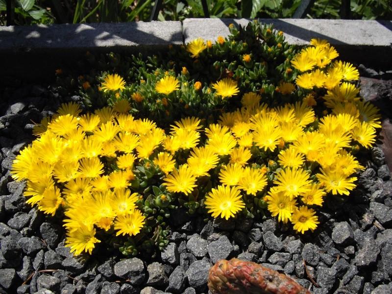 Sascha`s Blüten von 2013 211