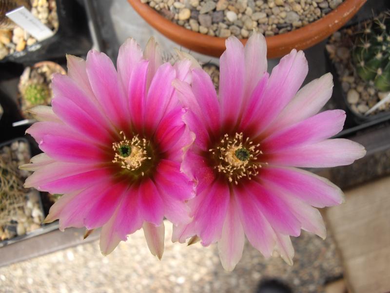 Sascha`s Blüten von 2013 213