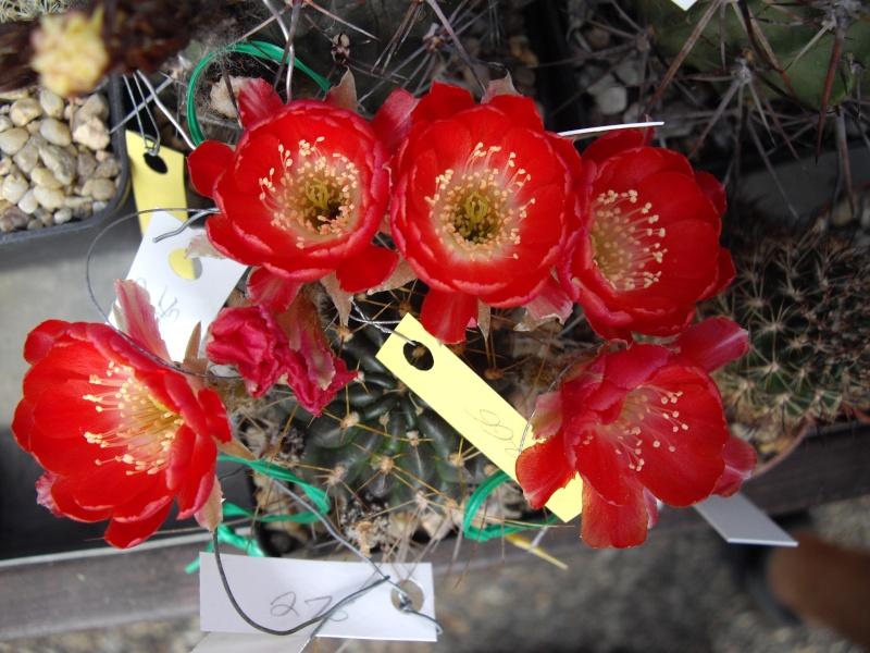 Sascha`s Blüten von 2013 215