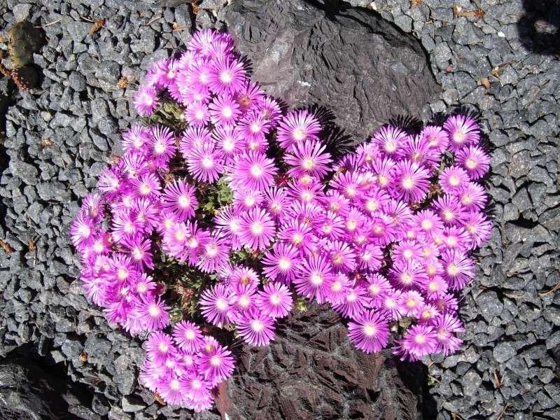 Sascha`s Blüten von 2013 Imgp9310