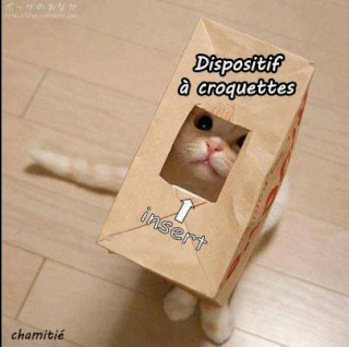 Chat alors! - Page 6 10032710
