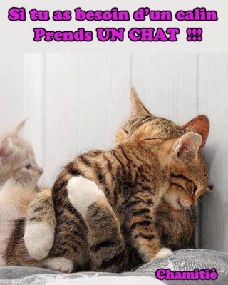 Chat alors! - Page 6 11503810