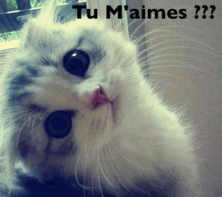 Chat alors! - Page 6 11507811