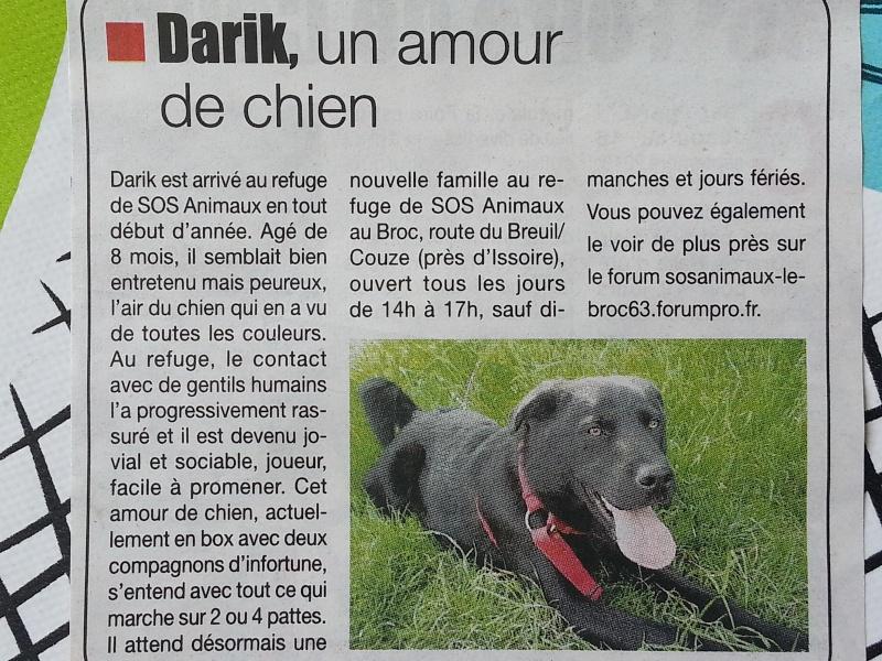 DARIK (mâle croisé labrador) - Page 2 20130911