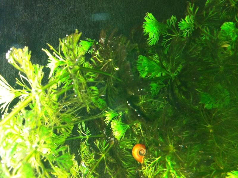 Démarrage aquarium 100L mais eau très dure, pH élevé - Page 3 Aqua110