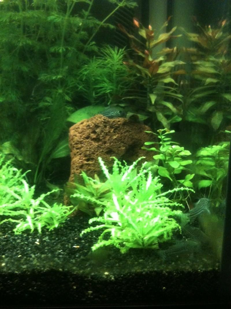 Démarrage aquarium 100L mais eau très dure, pH élevé - Page 3 Image10