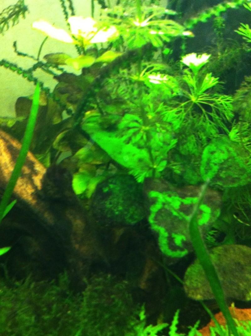 Démarrage aquarium 100L mais eau très dure, pH élevé - Page 3 Image11