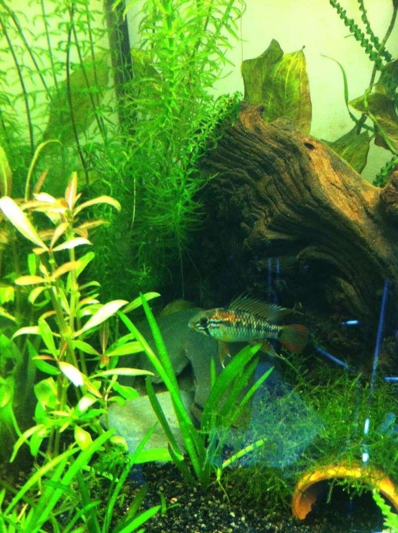 Démarrage aquarium 100L mais eau très dure, pH élevé - Page 3 Image_11