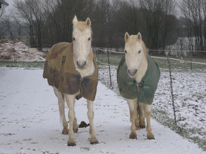 Acheter des couvertures pour cet hiver? - Page 2 Chevau10