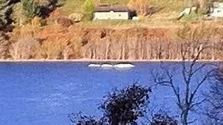 Nova imagem reacende mistério sobre monstro do Loch Ness 33e1wy10
