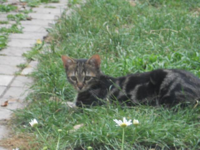 Réservé !! Ivan - Adorable chatounet née le 15/04/2013 -  En FA à Amiens (80) Dscn6813