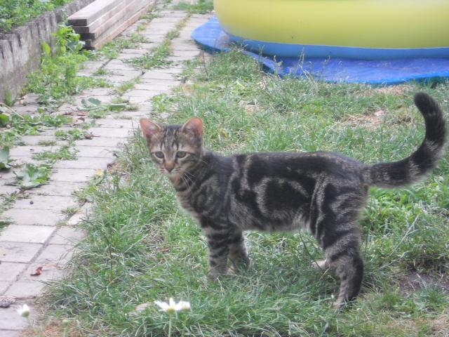 Réservé !! Ivan - Adorable chatounet née le 15/04/2013 -  En FA à Amiens (80) Dscn6814