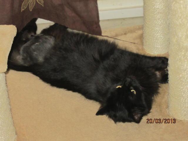 Iloa - superbe minette angora noire (80) Adoptée :) Img_3621