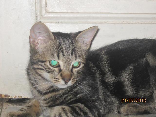 Réservé !! Ivan - Adorable chatounet née le 15/04/2013 -  En FA à Amiens (80) Img_4910