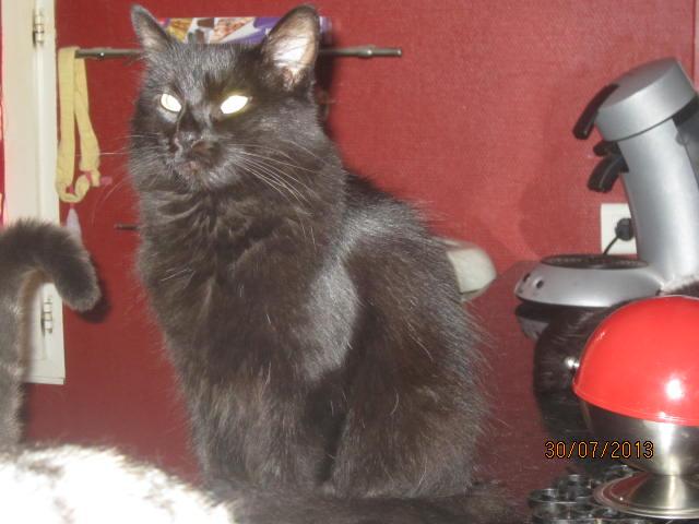 Iloa - superbe minette angora noire (80) Adoptée :) Img_5016