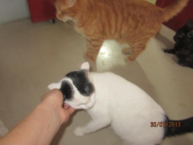 Violette - blanche et noire née en 2012 Img_5020