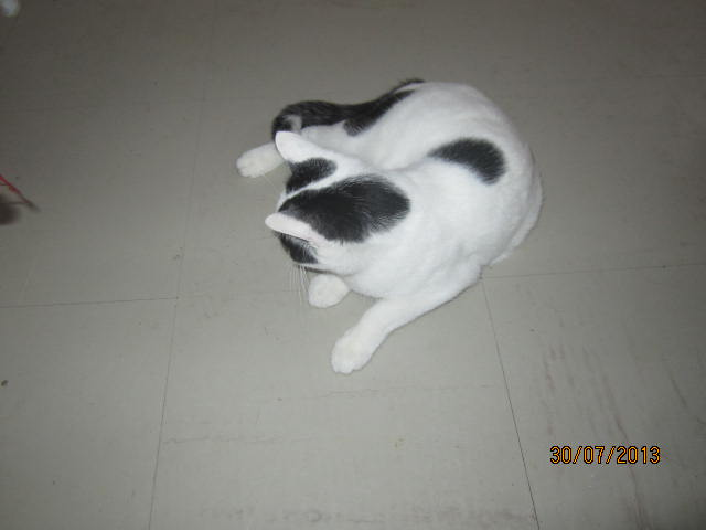 Violette - blanche et noire née en 2012 Img_5021