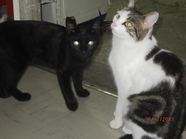 Noiraud - noir yeux verts né en 2013 Img_5026
