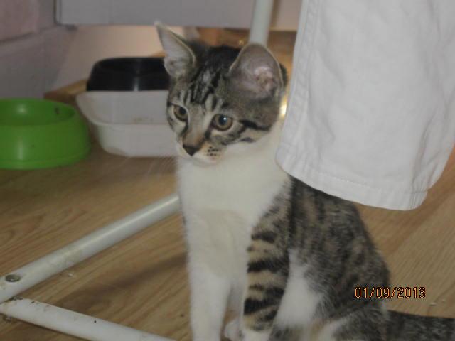 Channel - Adorable chatonne tigrée et blanche - Née le 14/06/2013 - Adoptée dans le 80 Img_5620
