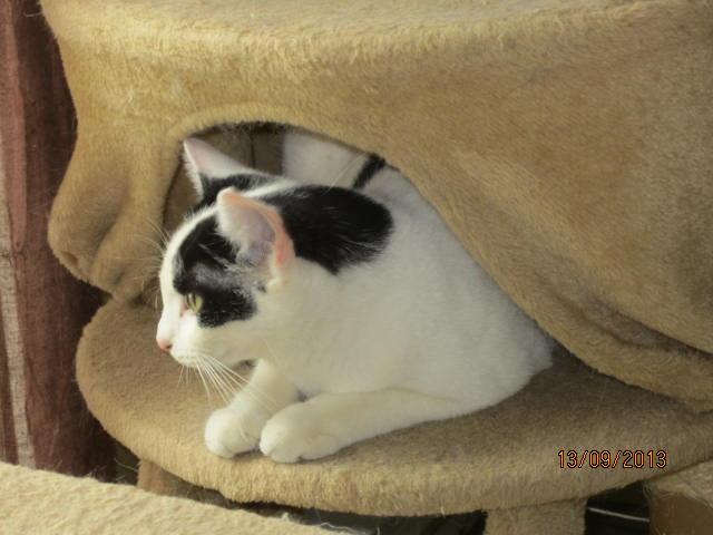 Violette - blanche et noire née en 2012 Img_5741