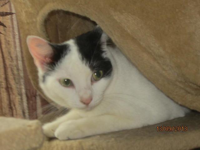 Violette - blanche et noire née en 2012 Img_5743