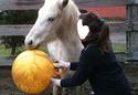 divertir nos chevaux  00212