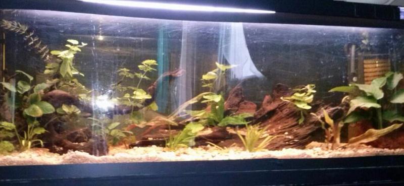 Mon tout premier aquarium 32141_10