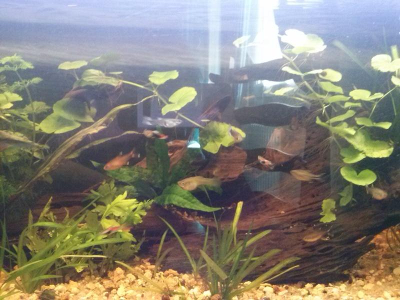 Mon tout premier aquarium - Page 2 Cam00020