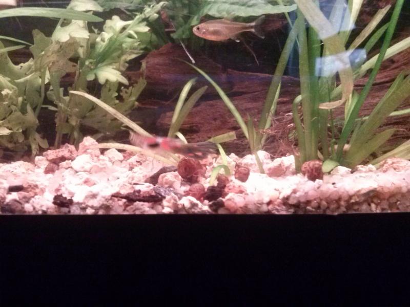 Mon tout premier aquarium - Page 2 Cam00022