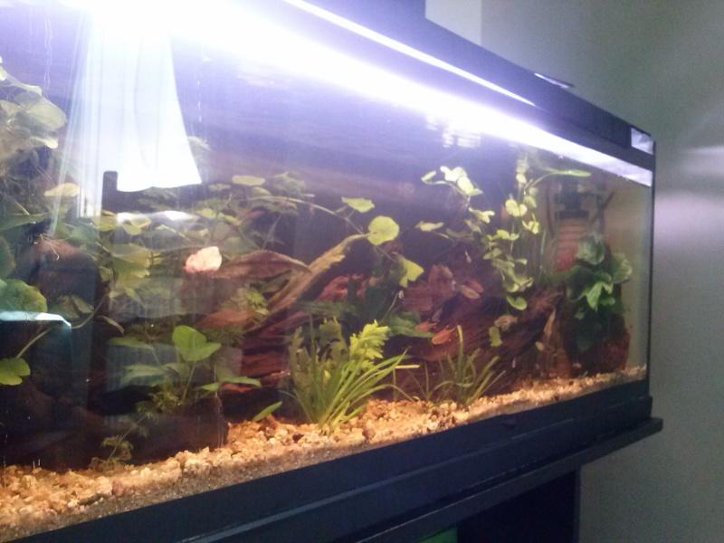 Mon tout premier aquarium - Page 2 Cam00023