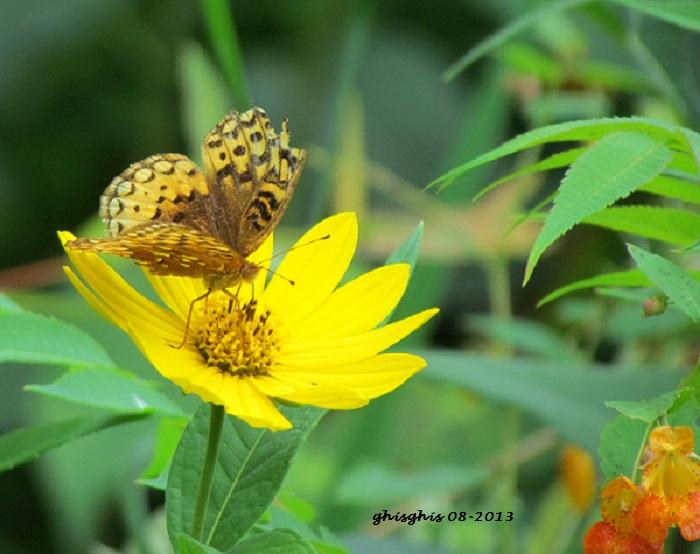 Diversité de la faune et la flore sauvages Papill11