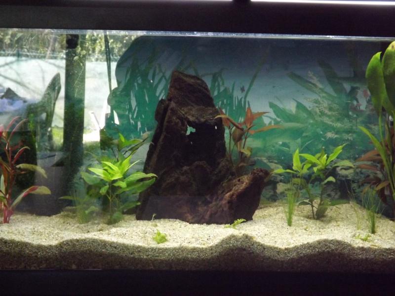 mon premier aquarium Dscf1210