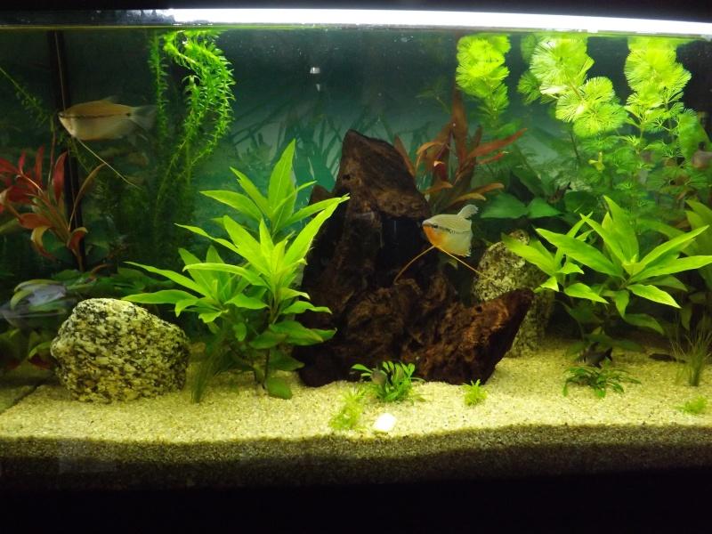 mon premier aquarium - Page 4 Dscf1310