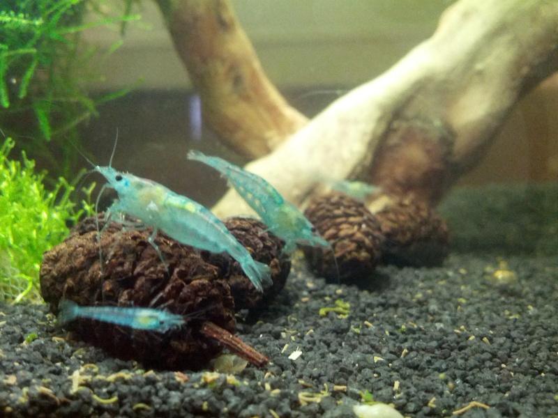 Bob's Shrimp - Page 4 2013-029