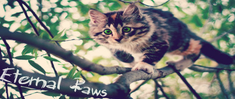 Eternal Paws ~ A Warriors Roleplay Cat-wa11