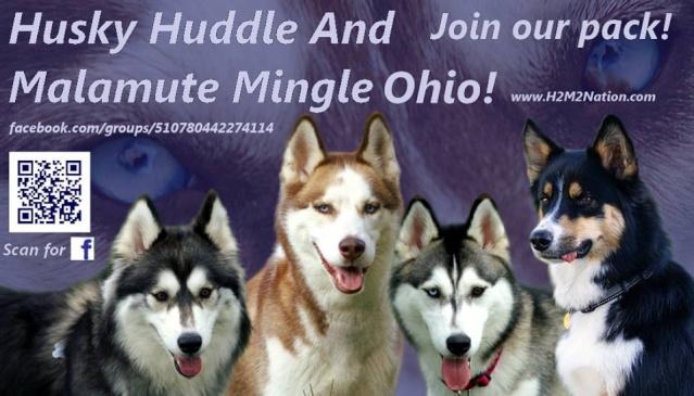 H2M2 Ohio husky meets! - Page 3 H2m2_l10