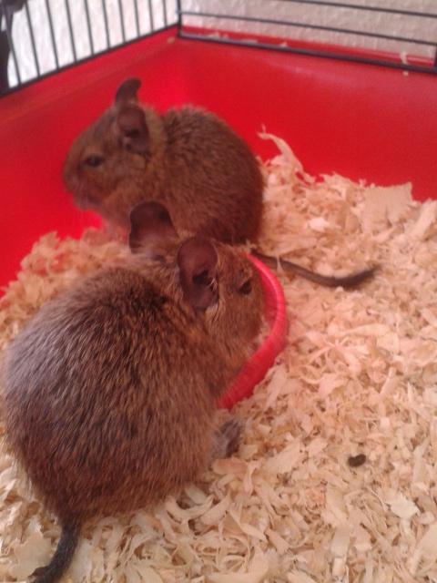 Praline & Cookie 2012-112