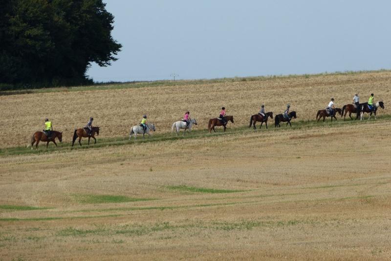 bons plans sur la mode plus gros rabais coupon de réduction Pourquoi ces chevaux ont les yeux cachés? ???