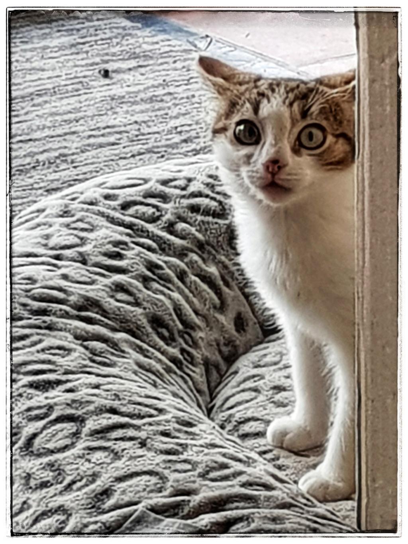 Olga, femelle type européenne tigrée noire et blanche née le 20 septemebre 2018 - Page 2 20181217