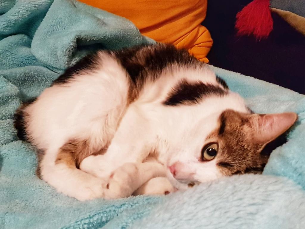 Olga, femelle type européenne tigrée noire et blanche née le 20 septemebre 2018 - Page 5 20190131