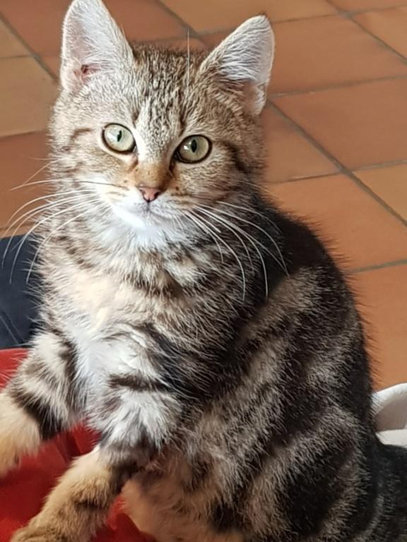 Pompon, femelle type européen tigrée née le 1er octobre 2019 - Page 2 20200119