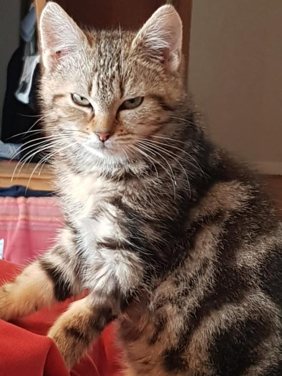 Pompon, femelle type européen tigrée née le 1er octobre 2019 - Page 2 20200120