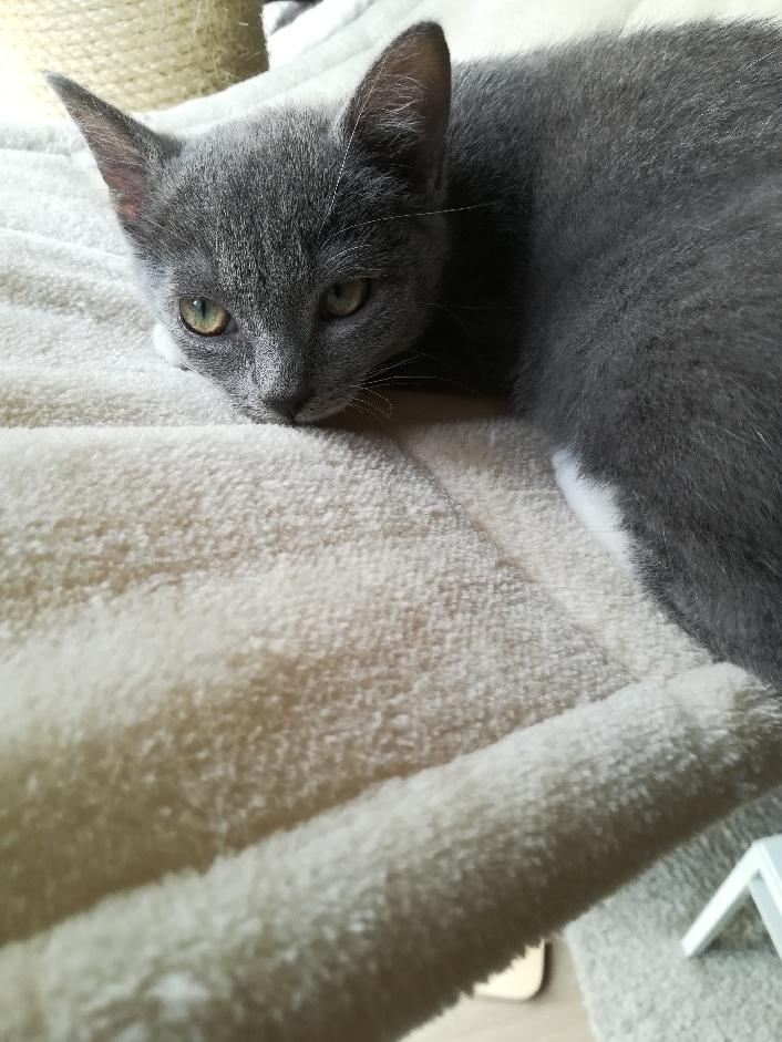 Pixie, femelle type européen grise et blanche, estimée 8 juin 2019 - Page 5 Part_119