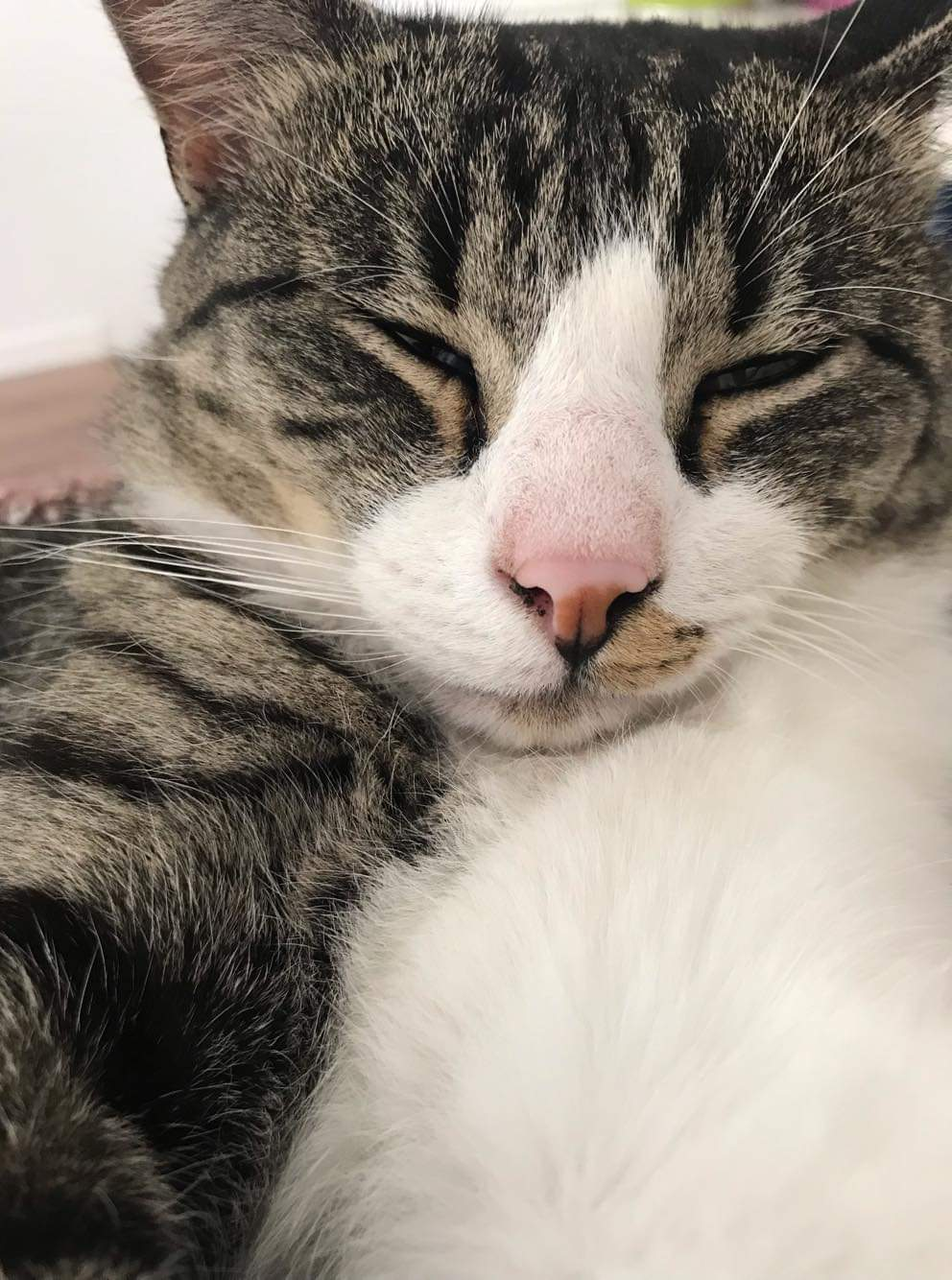 Ponko, mâle type européen tabby et blanc né 15 mai 2017 - Page 2 Receiv27