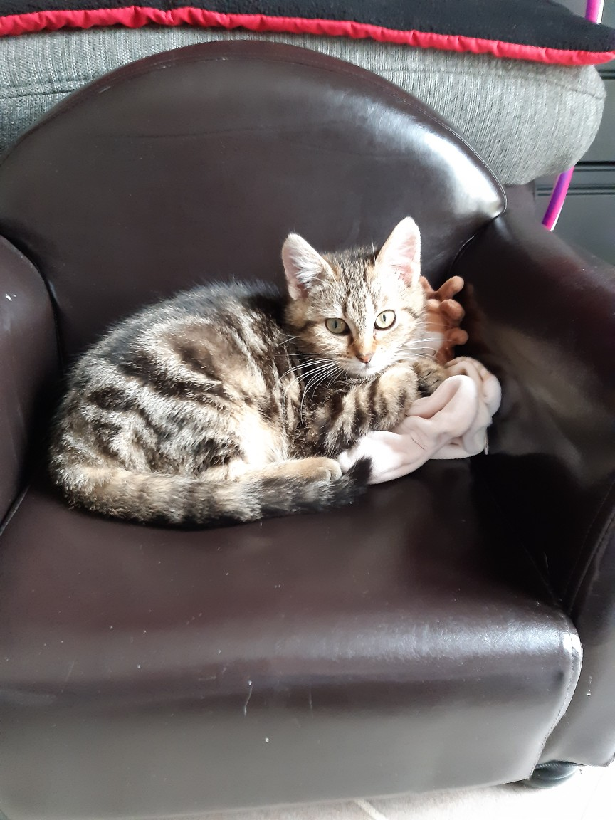 Pompon, femelle type européen tigrée née le 1er octobre 2019 - Page 2 Resize14
