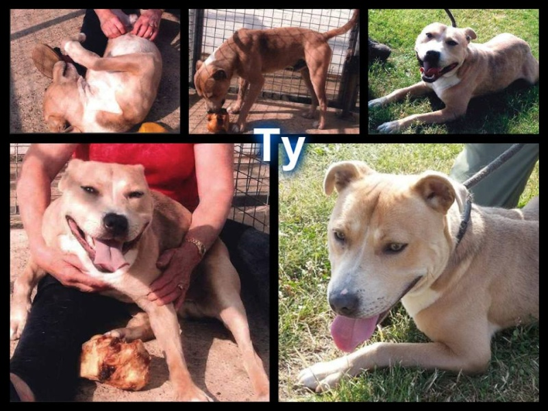 Meet Ty needs rescue by 6/8 or will be PTS now has a RESCUE :) Ty10