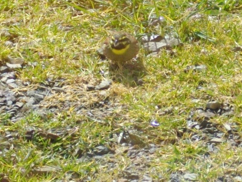 quel est cet oiseau? Oiseau10